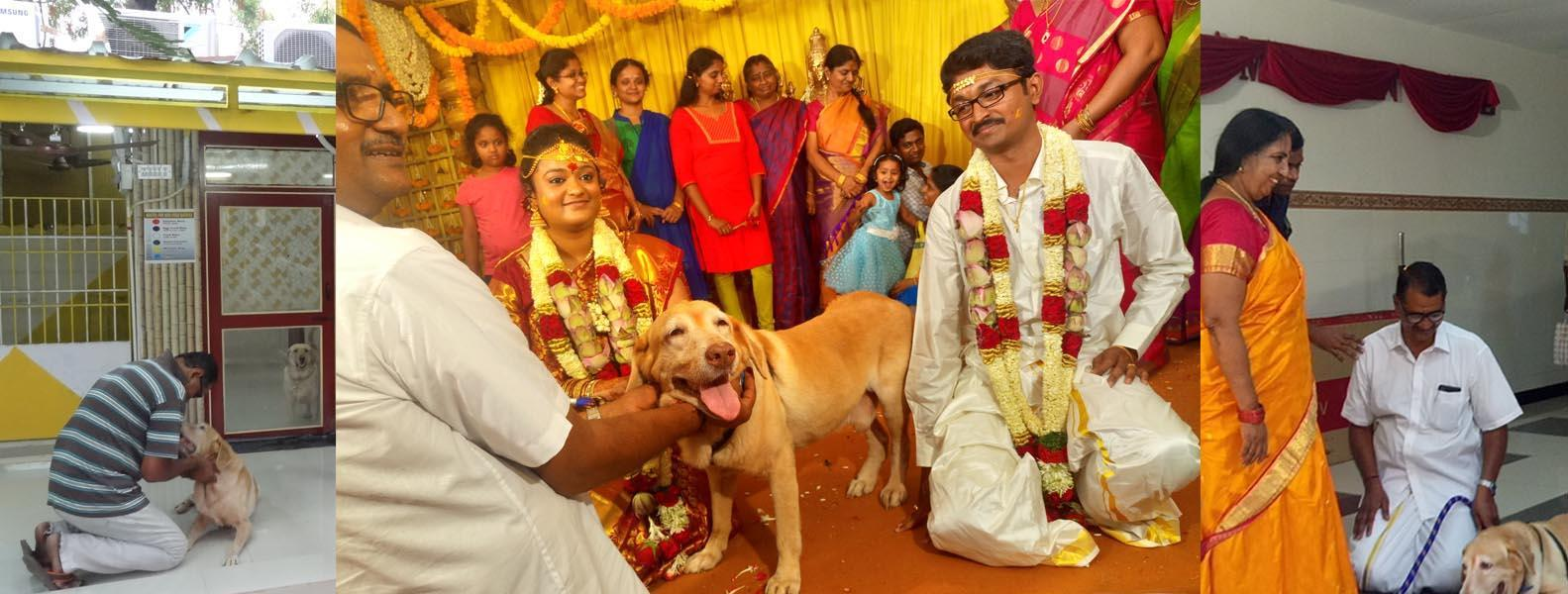 Hostel for dogs in chennai