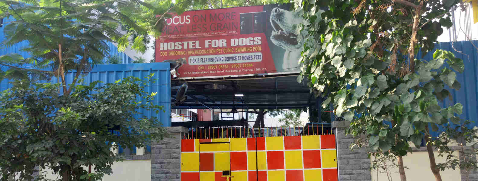Hostel for dogs