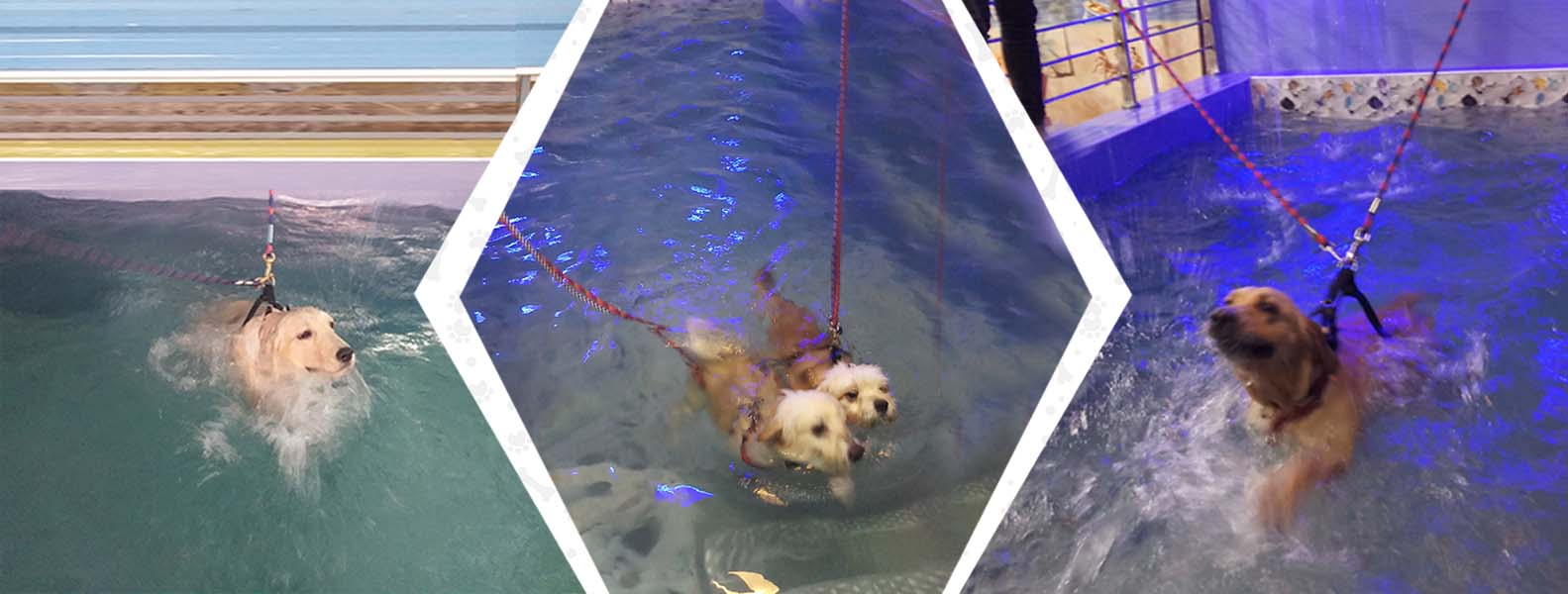 swimming-pool-for-dogs